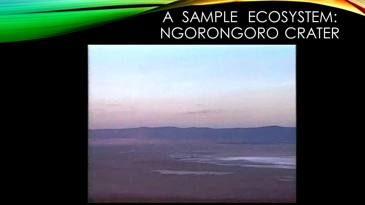 A sample ecosystem: Ngorongoro crater