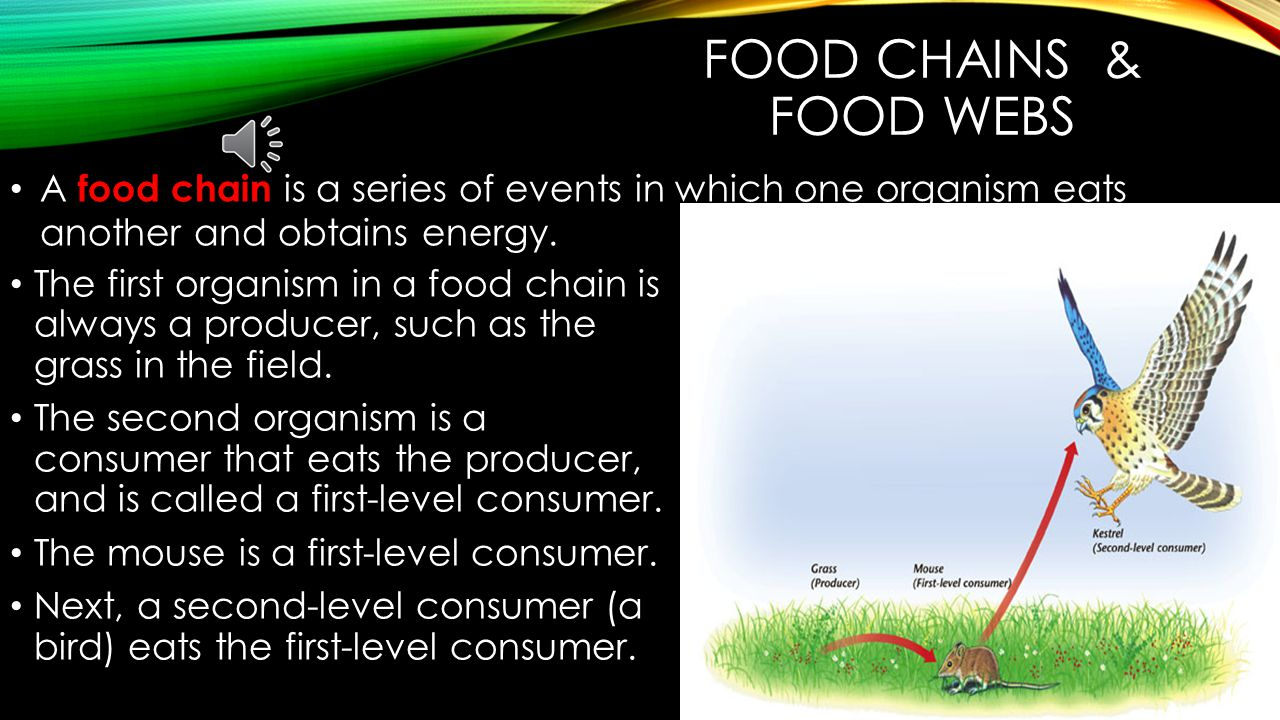 Food Chains & food webs A food chain is a series of events in which one organism eats another and obtains energy.