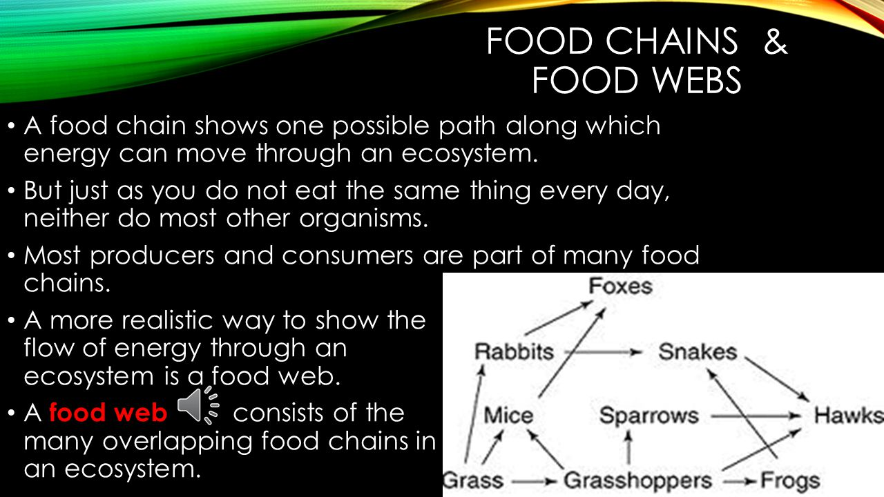 Food Chains & food webs A food chain shows one possible path along which energy can move through an ecosystem.