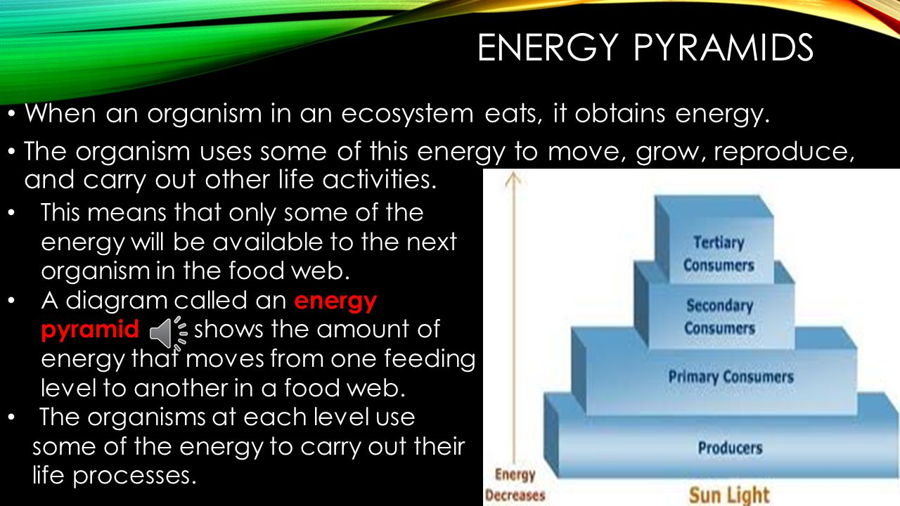 Energy Pyramids When an organism in an ecosystem eats, it obtains energy.