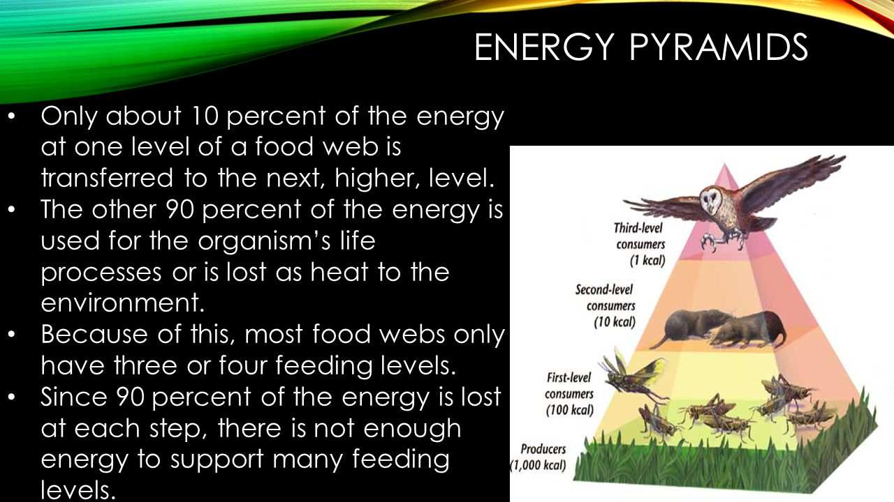 Energy Pyramids Only about 10 percent of the energy at one level of a food web is transferred to the next, higher, level.