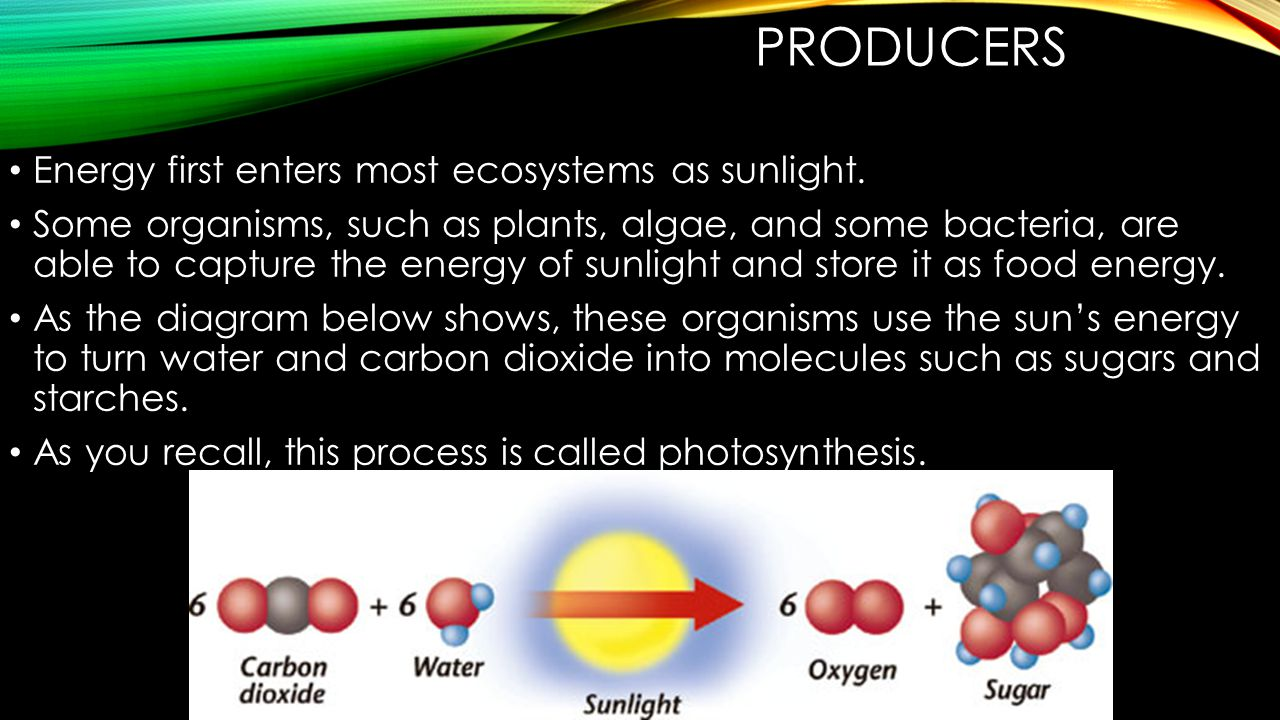 Producers Energy first enters most ecosystems as sunlight.