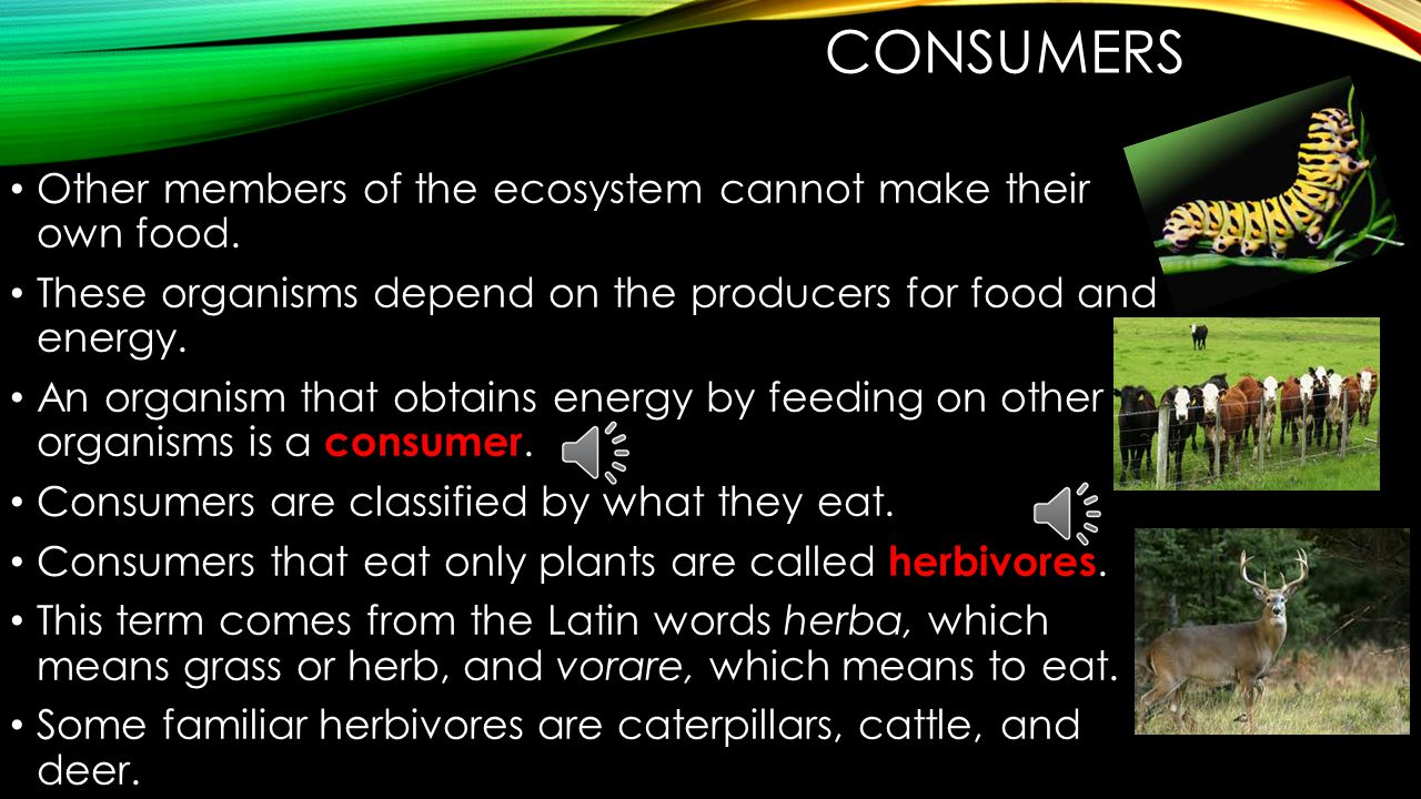 Consumers Other members of the ecosystem cannot make their own food.