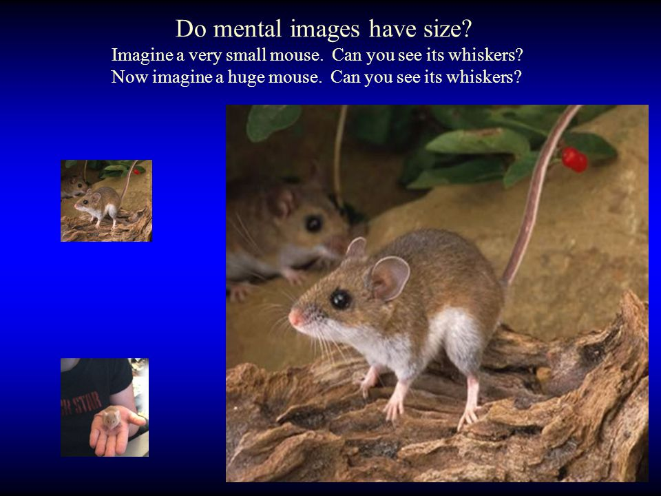Do mental images have size. Imagine a very small mouse