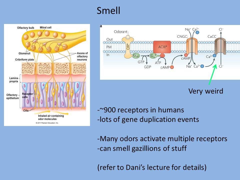Smell Very weird -~900 receptors in humans