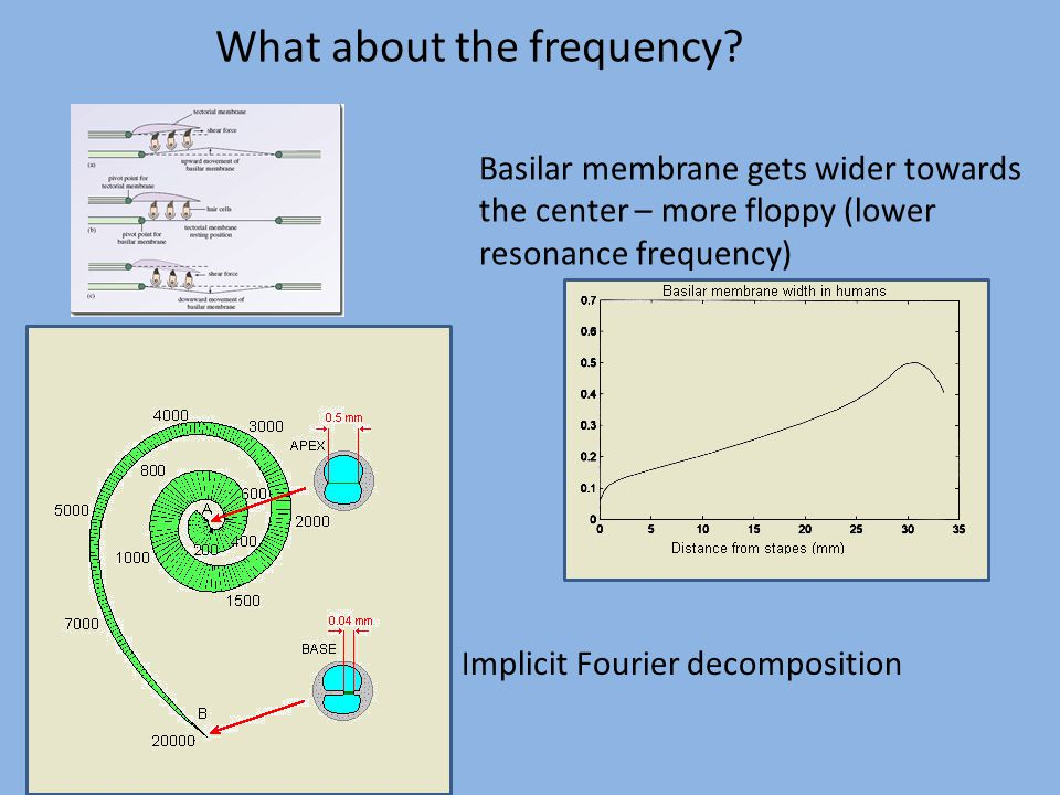 What about the frequency