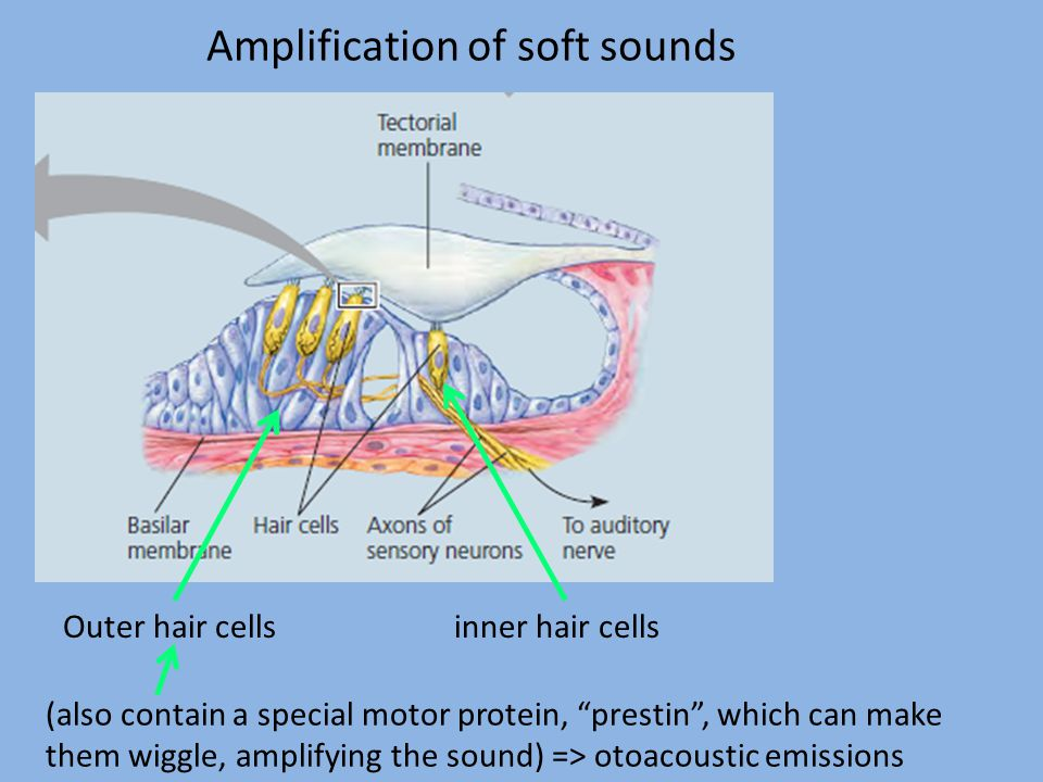 Amplification of soft sounds