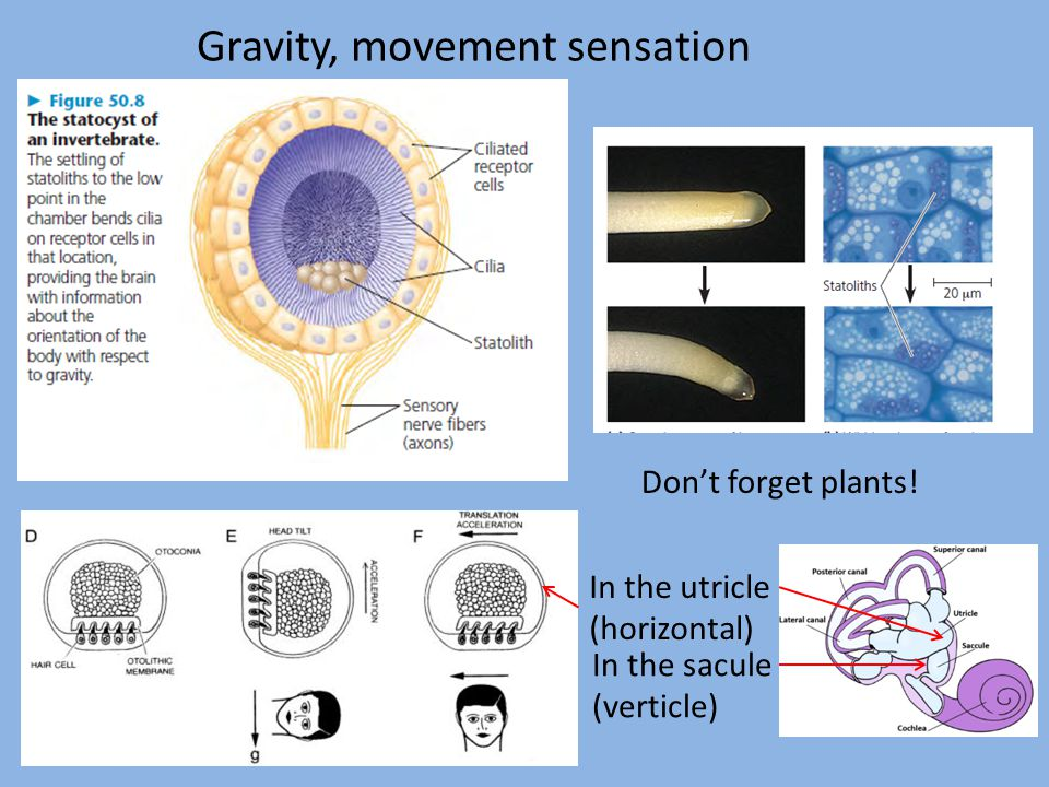 Gravity, movement sensation