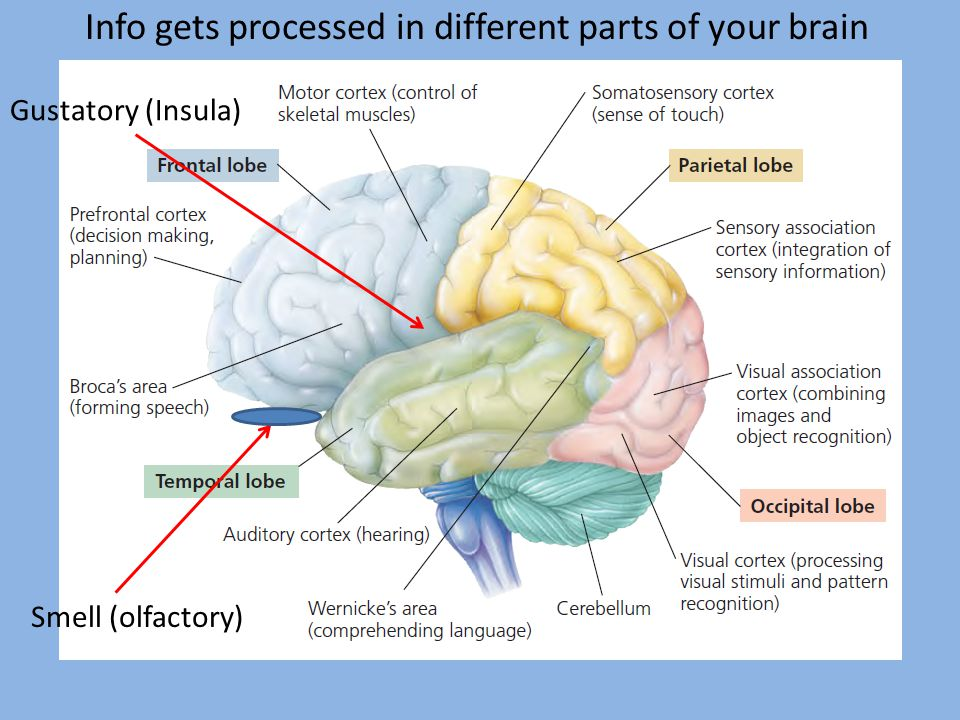 Info gets processed in different parts of your brain