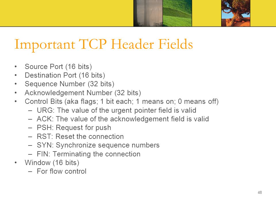 Important TCP Header Fields