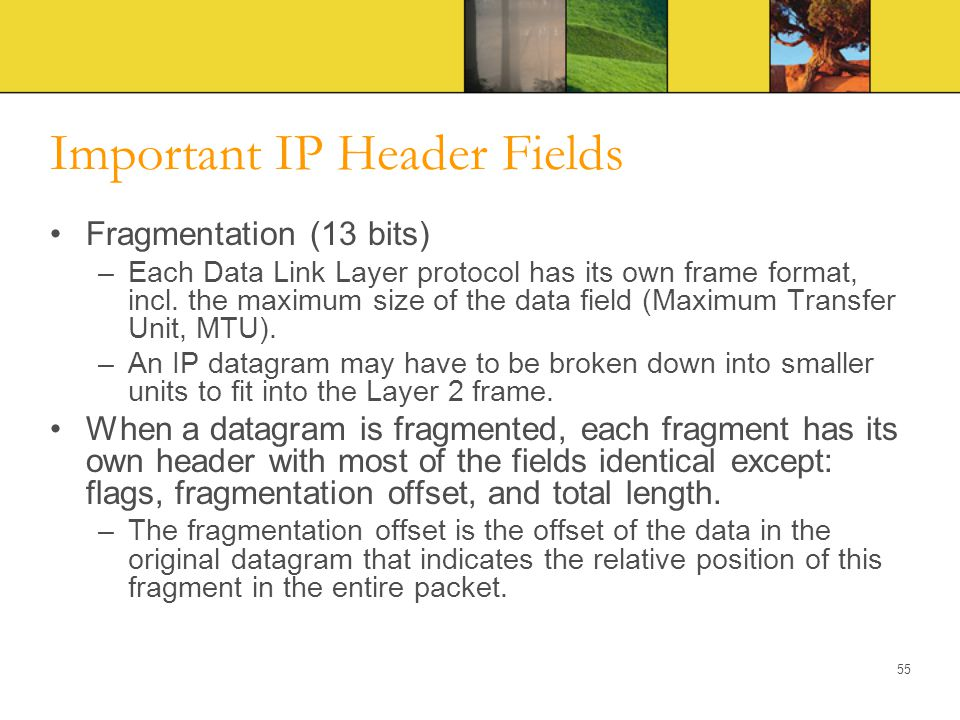 Important IP Header Fields