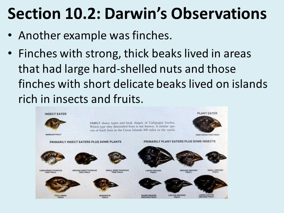 Section 10.2: Darwin's Observations