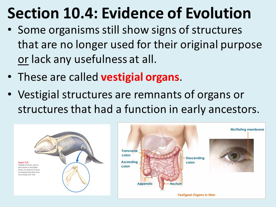 Section 10.4: Evidence of Evolution