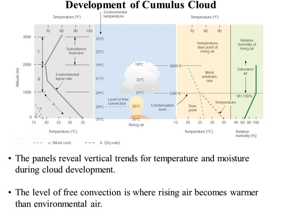 Development of Cumulus Cloud