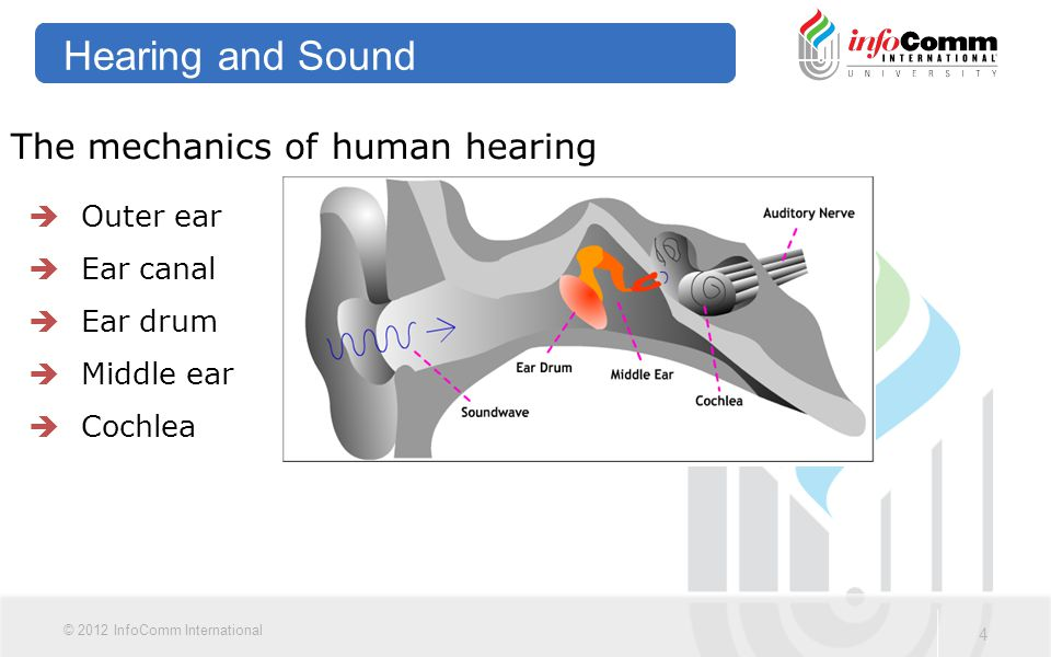 Hearing and Sound The mechanics of human hearing Outer ear Ear canal