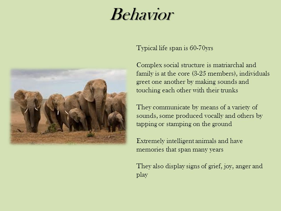 Behavior Typical life span is 60-70yrs