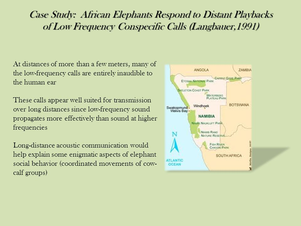 Case Study: African Elephants Respond to Distant Playbacks of Low Frequency Conspecific Calls (Langbauer,1991)