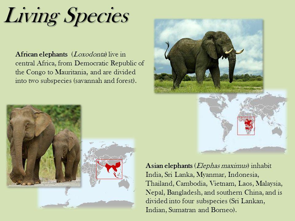 Living Species
