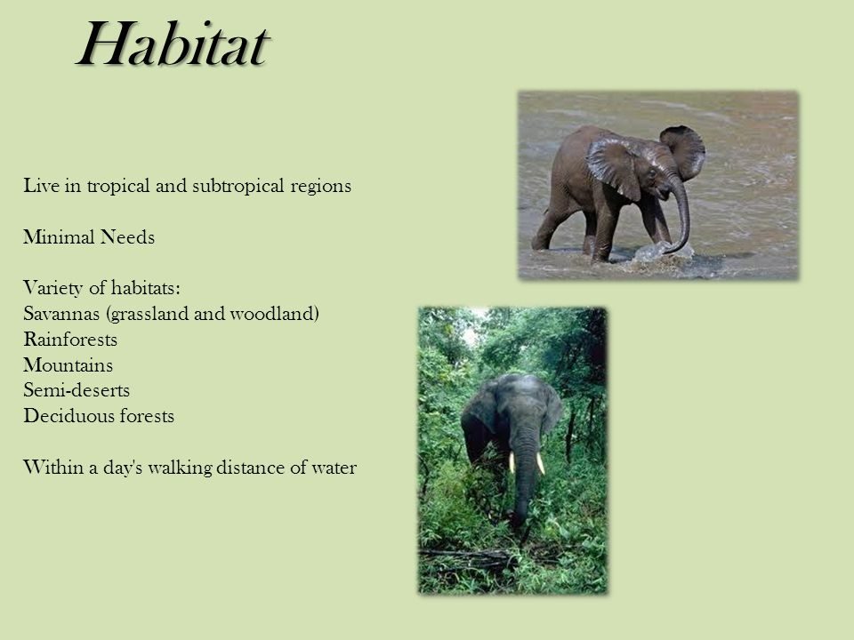 Habitat Live in tropical and subtropical regions Minimal Needs