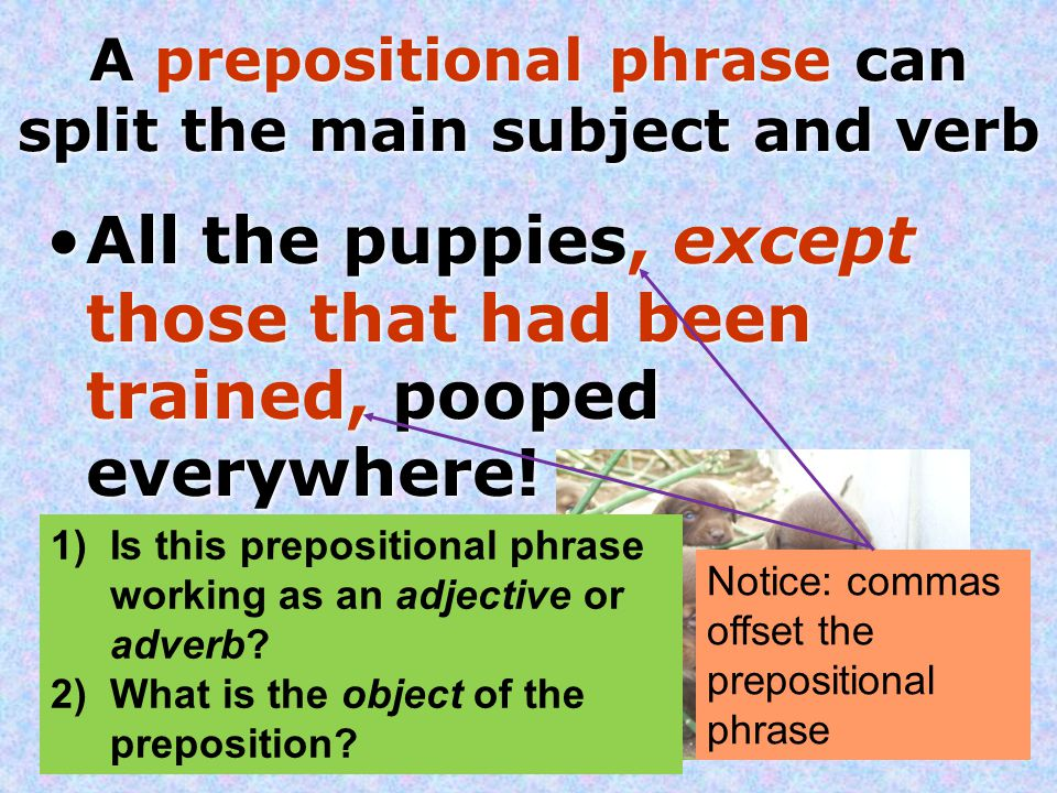 A prepositional phrase can split the main subject and verb