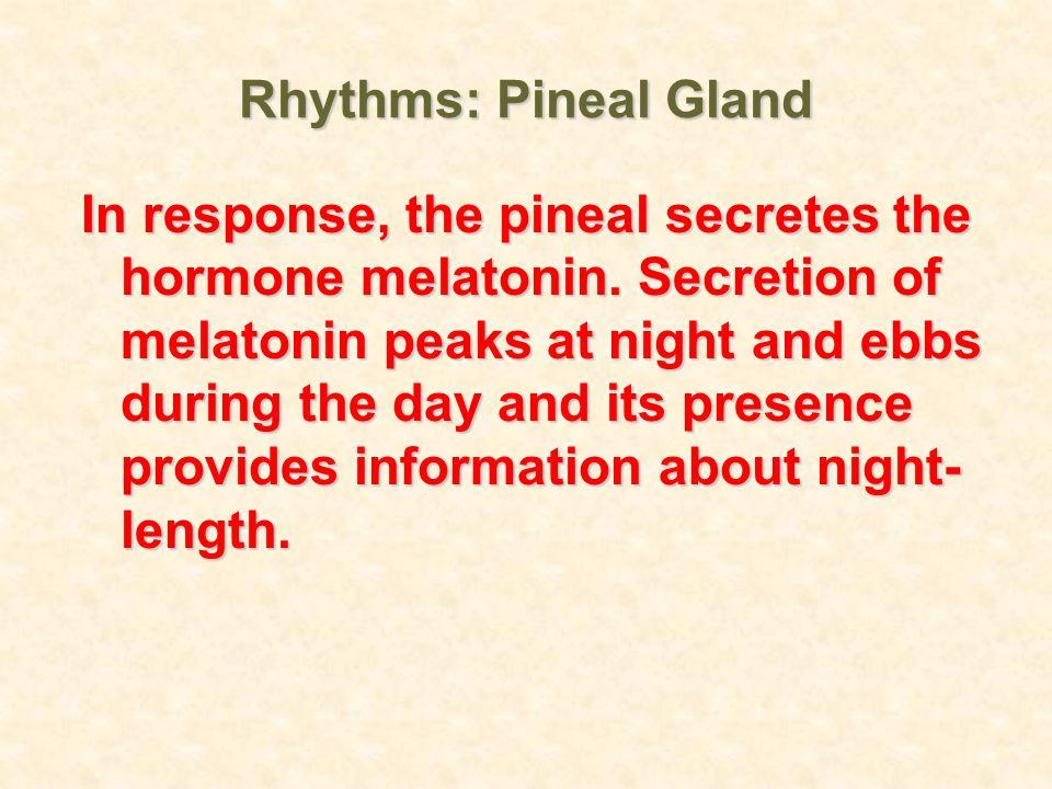 Rhythms: Pineal Gland