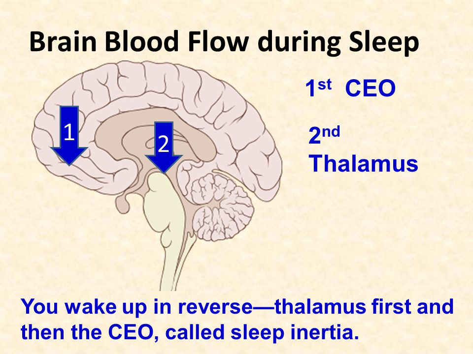 Brain Blood Flow during Sleep