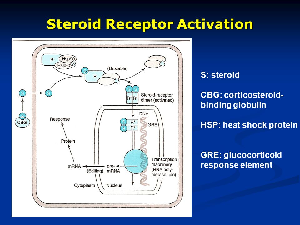 Steroid Receptor Activation