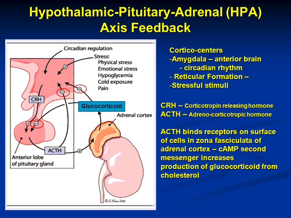 Hypothalamic-Pituitary-Adrenal (HPA) Axis Feedback