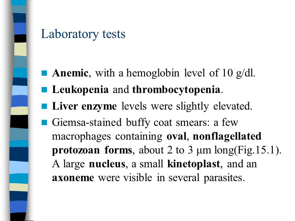 Laboratory tests Anemic, with a hemoglobin level of 10 g/dl.