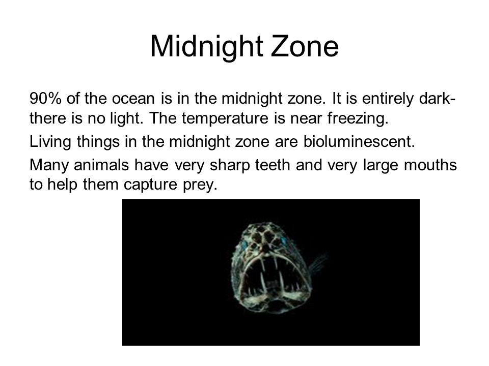 Midnight Zone