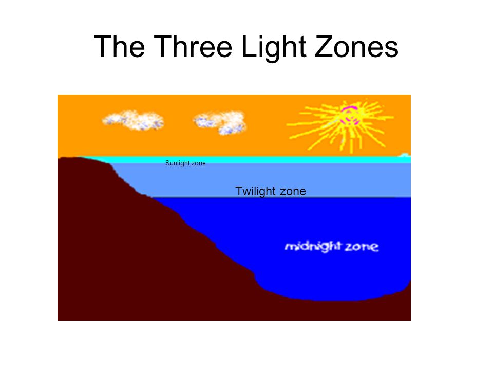 The Three Light Zones Sunlight zone Twilight zone