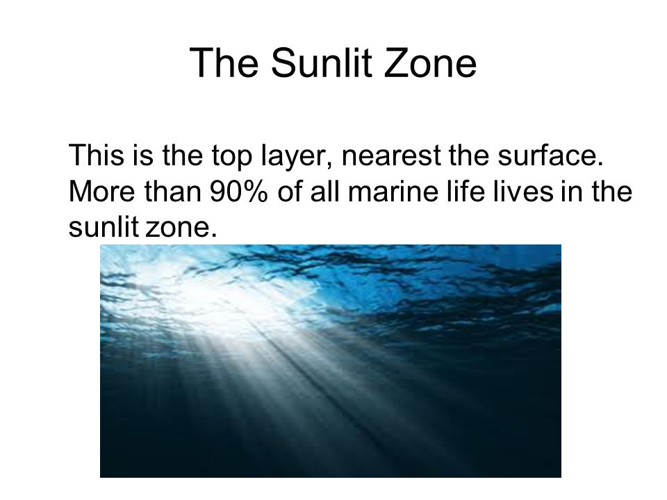 The Sunlit Zone This is the top layer, nearest the surface.
