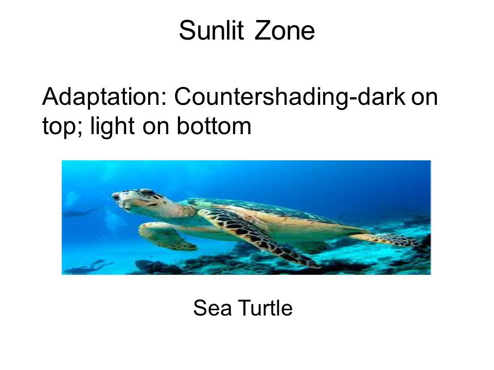 Sunlit Zone Adaptation: Countershading-dark on top; light on bottom