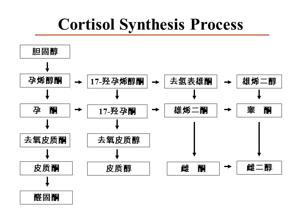 Cortisol Synthesis Process