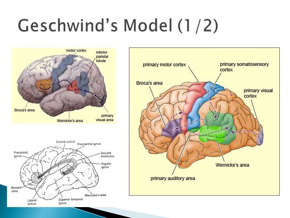 Geschwind's Model (1/2)