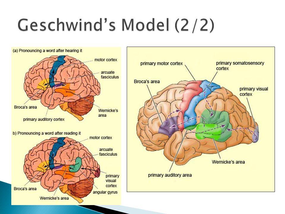 Geschwind's Model (2/2)