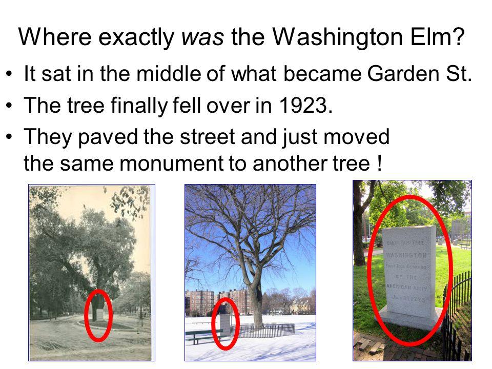 Where exactly was the Washington Elm