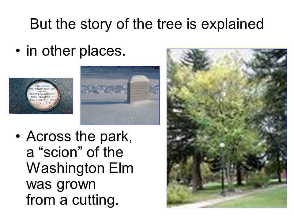 But the story of the tree is explained
