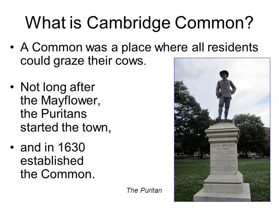 What is Cambridge Common