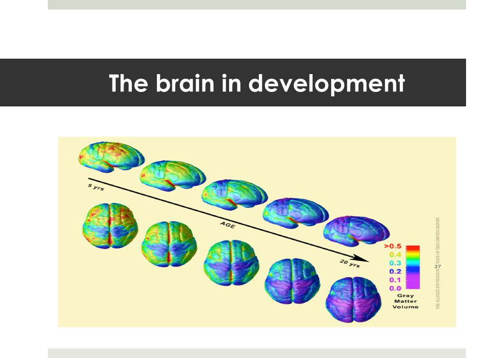 The brain in development