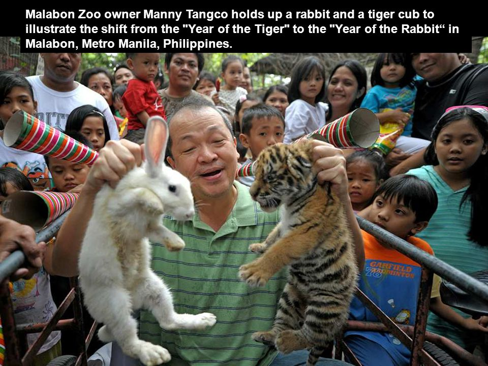 Malabon Zoo owner Manny Tangco holds up a rabbit and a tiger cub to illustrate the shift from the Year of the Tiger to the Year of the Rabbit in Malabon, Metro Manila, Philippines.