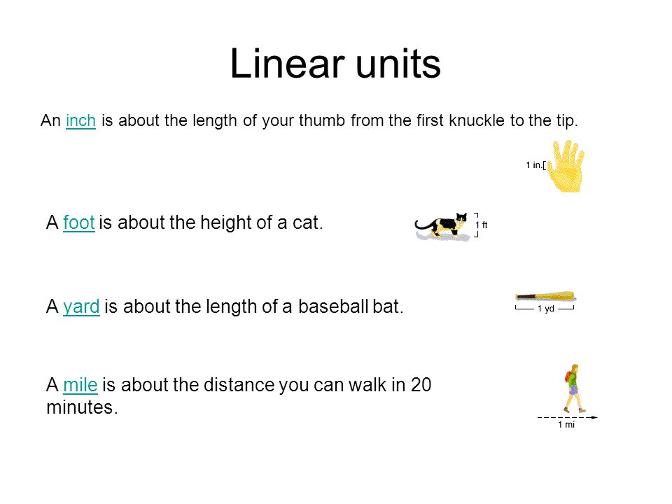 Linear units A foot is about the height of a cat.