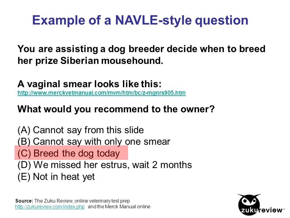 Example of a NAVLE-style question