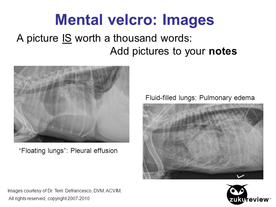 Mental velcro: Images A picture IS worth a thousand words: Add pictures to your notes.