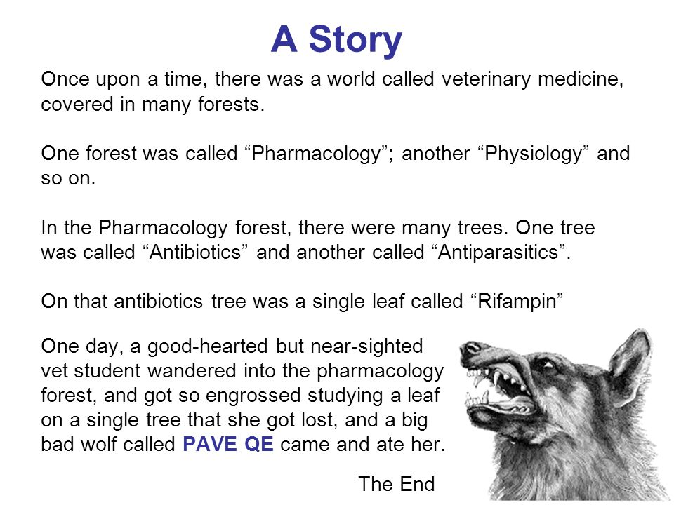 A Story Once upon a time, there was a world called veterinary medicine, covered in many forests.