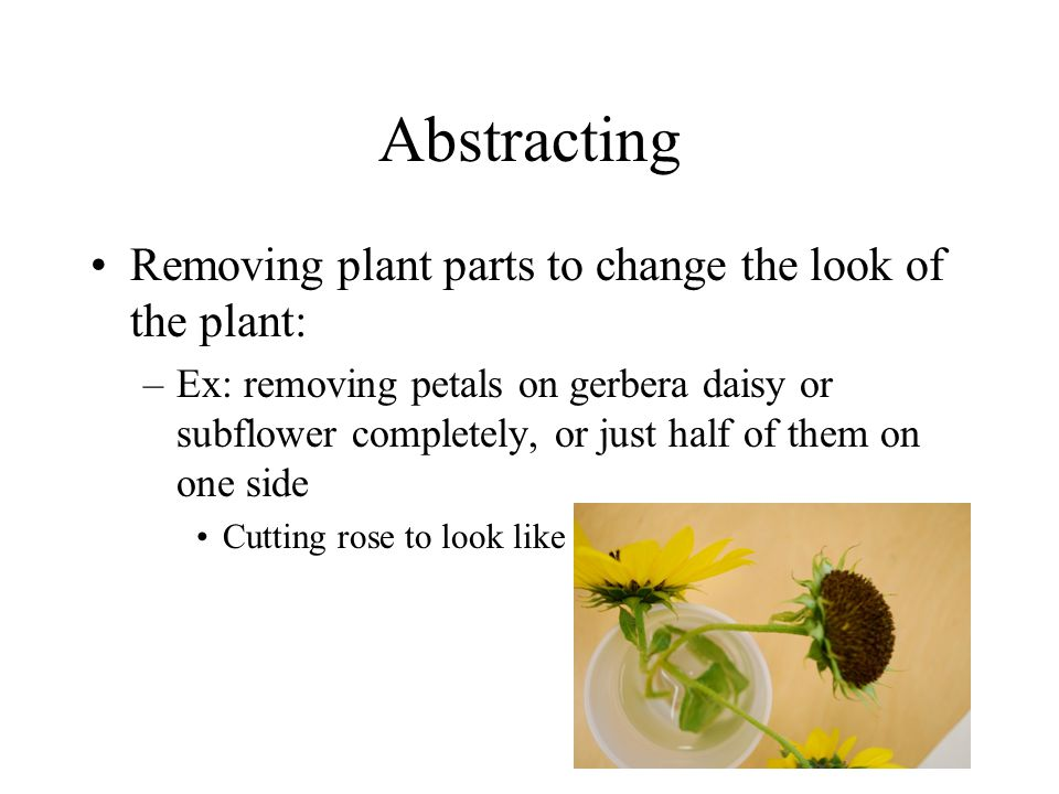 Abstracting Removing plant parts to change the look of the plant: