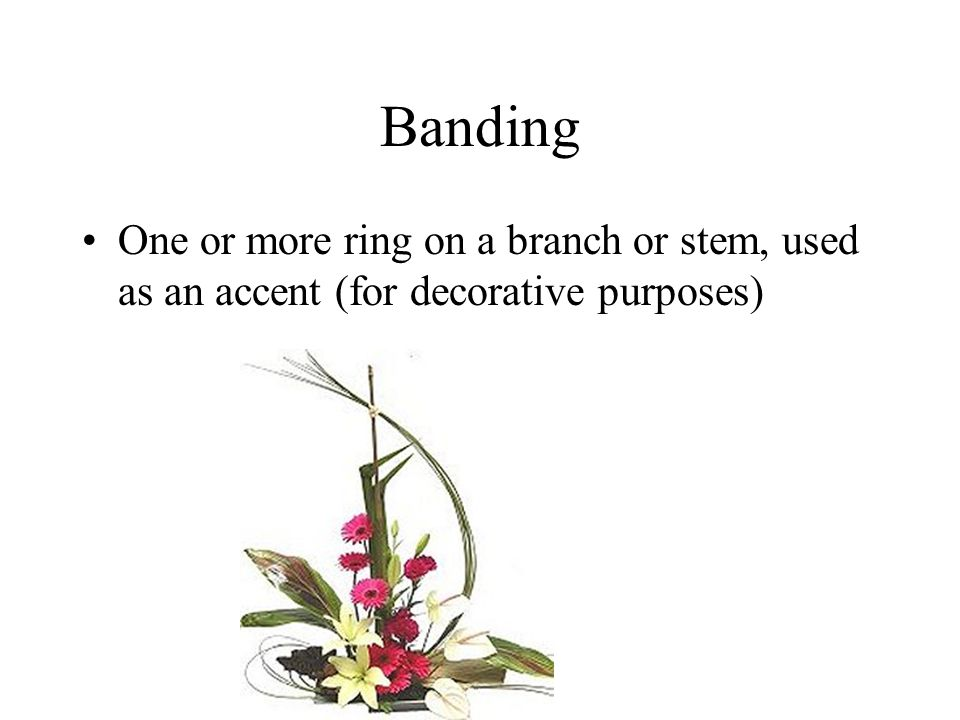 Banding One or more ring on a branch or stem, used as an accent (for decorative purposes)