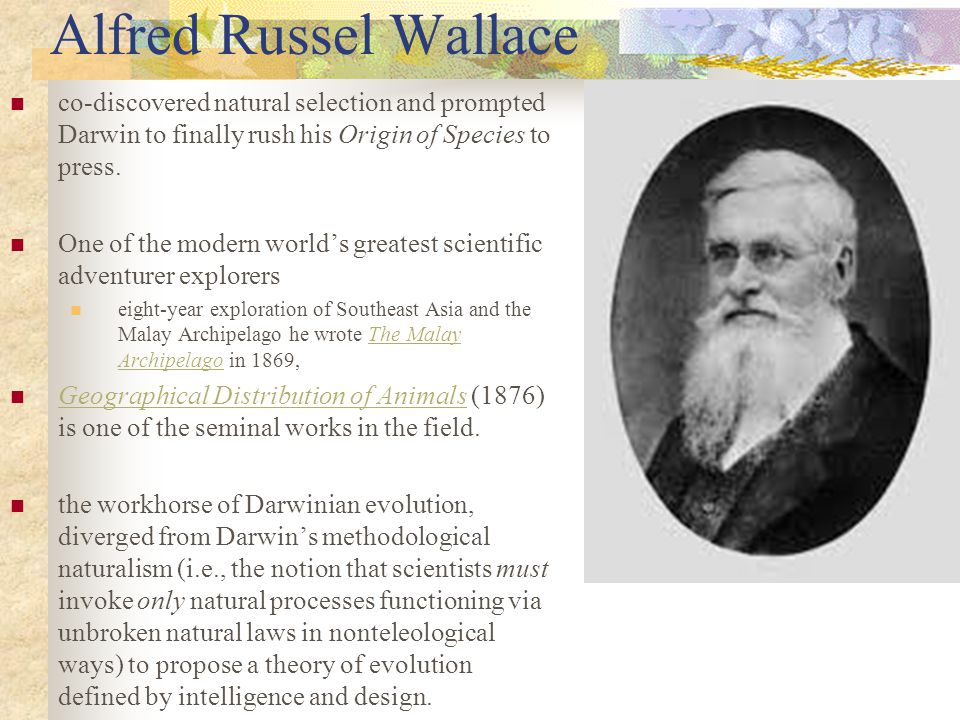 Alfred Russel Wallace co-discovered natural selection and prompted Darwin to finally rush his Origin of Species to press.