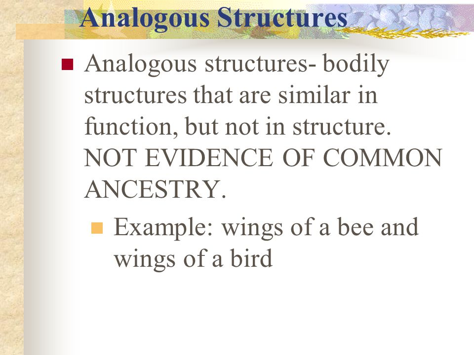 Analogous Structures Analogous structures- bodily structures that are similar in function, but not in structure. NOT EVIDENCE OF COMMON ANCESTRY.