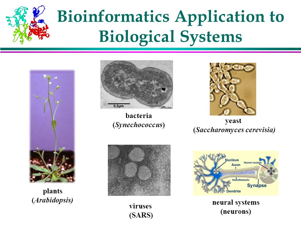 Bioinformatics Application to Biological Systems